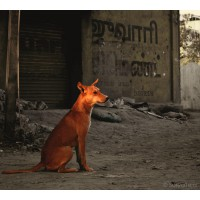 Home to 95000 Strays, Mumbai To Get Low-Cost BMC Pet Clinics & Crematoriums!