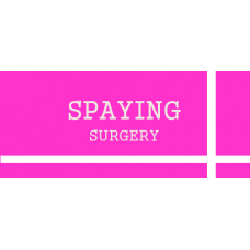 Pet Spaying Surgery