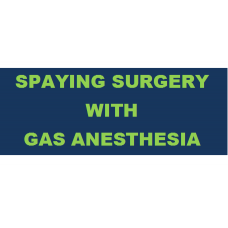 Pet Spaying Surgery with Gas Anesthesia