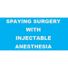 Pet Spaying Surgery with Injectable Anesthesia
