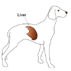 Pet LFT Test (Liver Function Test)