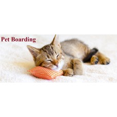 Pet Boarding Per Day Package For Cats
