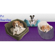 Home Pet Boarding 15 Day Plan For Small & Medium Breed