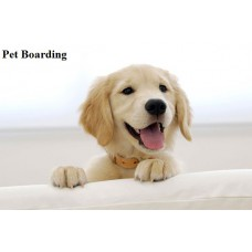 Home Pet Boarding Per Day For Large Breed