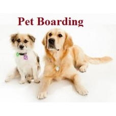Home Pet Boarding 7 Day Plan For Large Breed