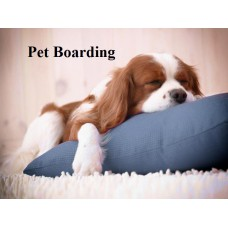 Home Pet Boarding Per Day For Small & Medium Breed