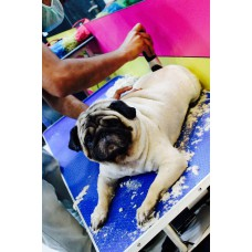 Grooming (Bathing & cutting) Packages