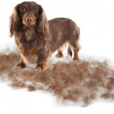De-Shedding Treatment (Small Breeds)