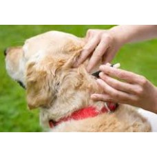 Tick and Flea Treatment (Large Breeds)