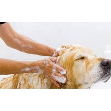 The Squeaky Clean Package (Giant Breeds)