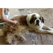 De-Shedding Treatment (Giant Breeds)