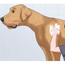 Dry Bath Package (Giant Breeds)