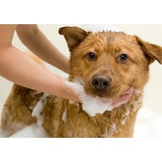 Dry Bath Package (Large Breeds)