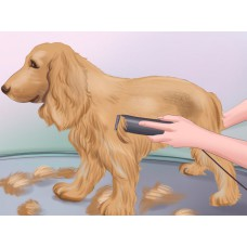 Squeaky Clean + Hair Clipping (Small Breeds)