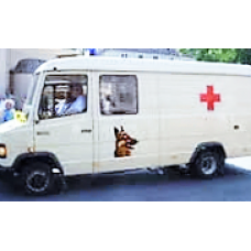Pet Ambulance Services (Delhi NCR)