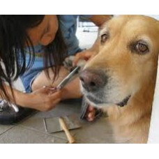 Home Visit Pet Grooming package (Large Breed)