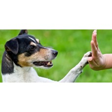 Pet Training - At door step- package