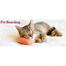Cat Boarding 11 Day Package