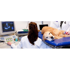 Pet Echocardiogram  Whole Abdomen
