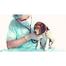 Pet Routine Heart Check up (ECHO + ECG) Voucher