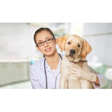 Dog Vaccination Package