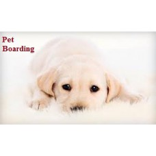 Pet Boarding 3 days Plan - Large Breed