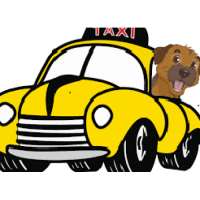 Pet Taxi Package - Delhi ..