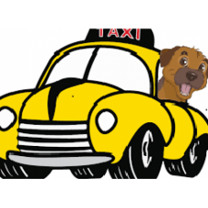 Pet Taxi Package - Delhi NCR