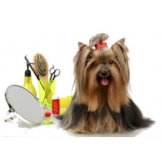 Grooming + Hair Clipping Package (For All Breeds)